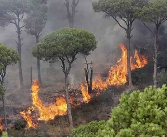 ورشة عمل في البلمند عن خطر الحرائق الحرجية