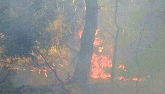 حريق هائل في أحراج كفتون