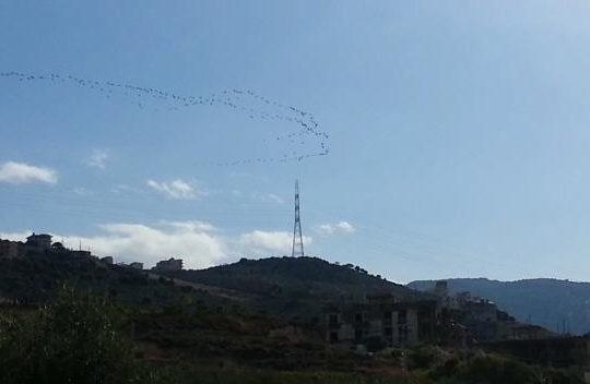 الطيور المهاجرة تجتاح سماء كفرعقا منذ قليل.