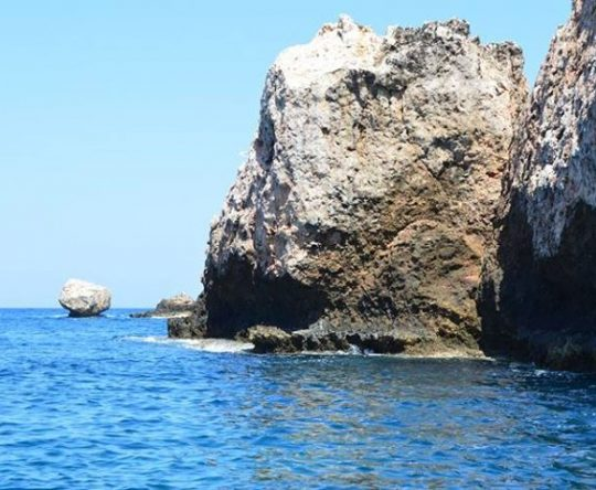 محمية جزر النخل وسنني ورامكين، ومعهد الدراسات البيئية في جامعة البلمند